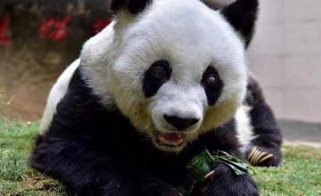 China mourns the loss of world's oldest panda